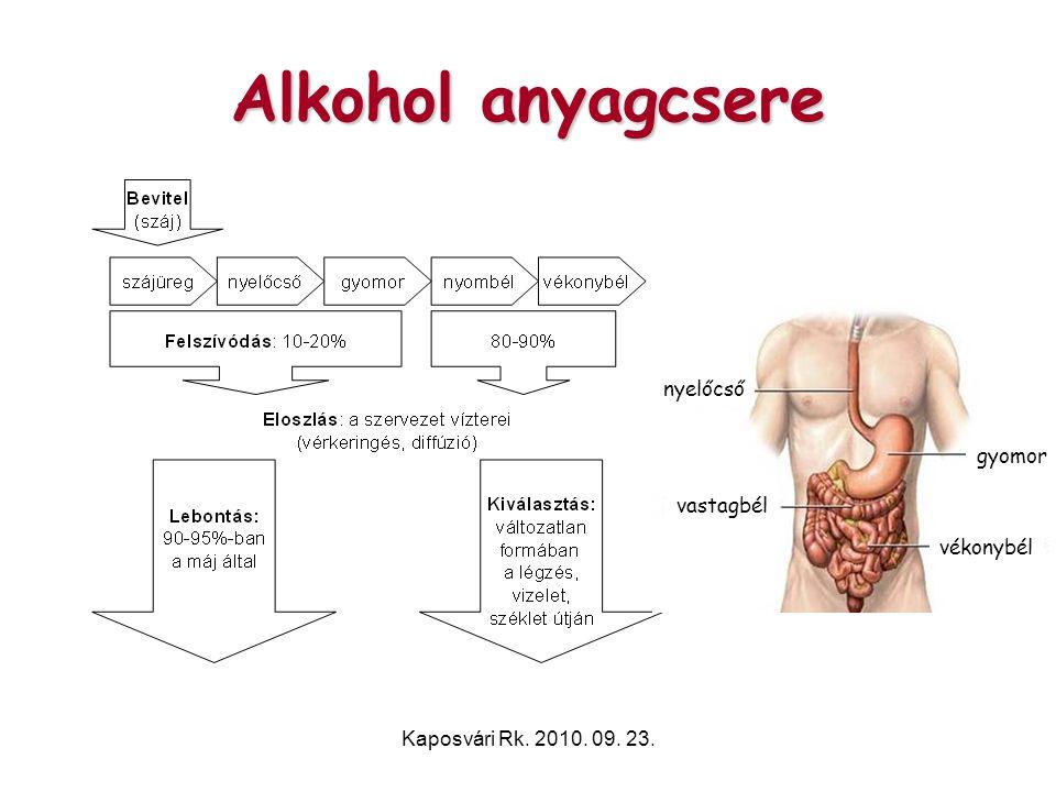 Kaposvári Rk. 2010. 09. 23. Alkohol anyagcsere nyelőcső vastagbél gyomor vékonybél