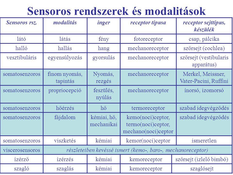 Sensoros rendszerek és modalitások Sensoros rsz.modalitásingerreceptor típusareceptor sejttípus, készülék látólátásfényfotoreceptorcsap, pálcika halló