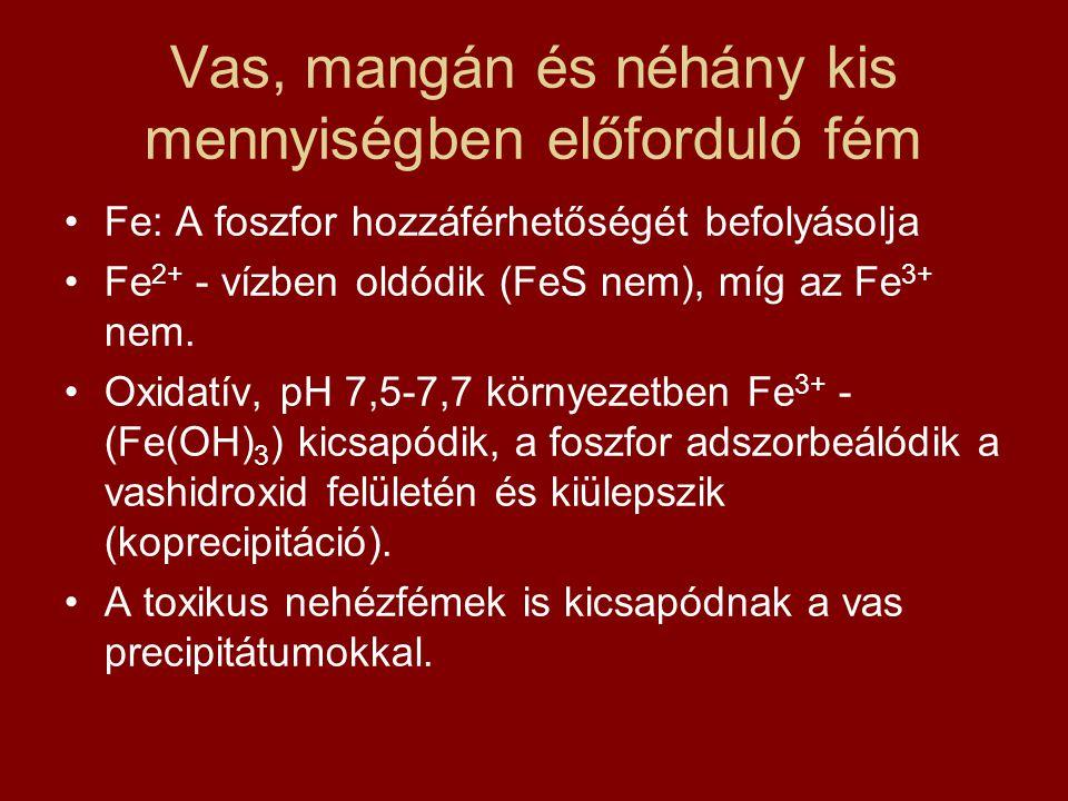 Vas, mangán és néhány kis mennyiségben előforduló fém •Fe: A foszfor hozzáférhetőségét befolyásolja •Fe 2+ - vízben oldódik (FeS nem), míg az Fe 3+ ne