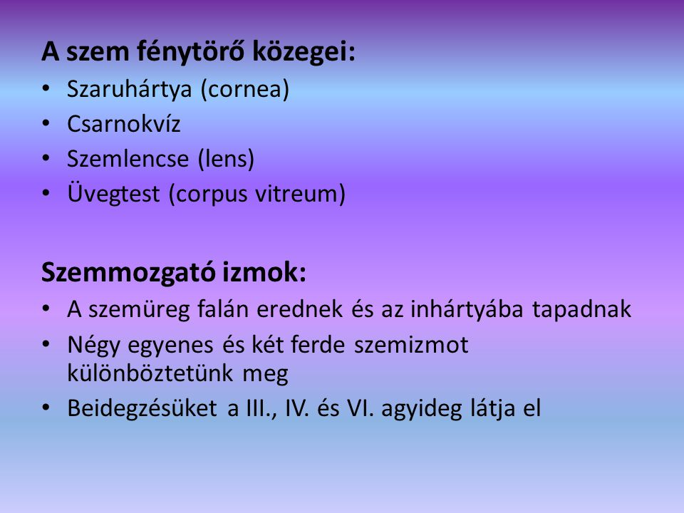 A szem fénytörő közegei: • Szaruhártya (cornea) • Csarnokvíz • Szemlencse (lens) • Üvegtest (corpus vitreum) Szemmozgató izmok: • A szemüreg falán ere