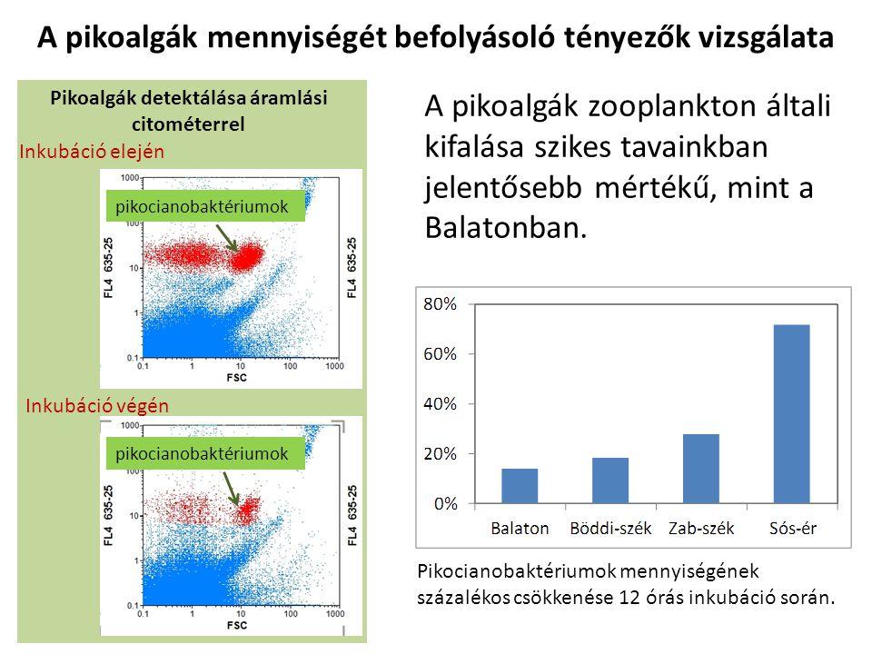 pikocianobaktériumok Pikoalgák detektálása áramlási citométerrel Inkubáció elején Inkubáció végén Pikocianobaktériumok mennyiségének százalékos csökke