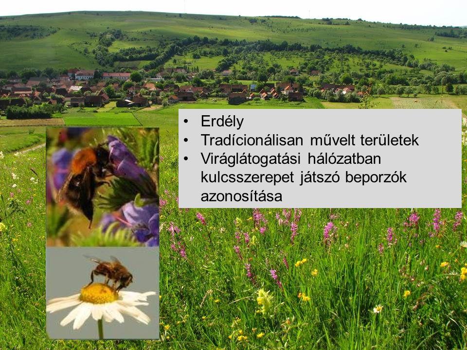 •Erdély •Tradícionálisan művelt területek •Viráglátogatási hálózatban kulcsszerepet játszó beporzók azonosítása