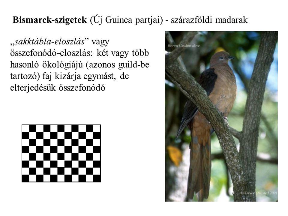 """Bismarck-szigetek (Új Guinea partjai) - szárazföldi madarak """"sakktábla-eloszlás"""" vagy összefonódó-eloszlás: két vagy több hasonló ökológiájú (azonos g"""
