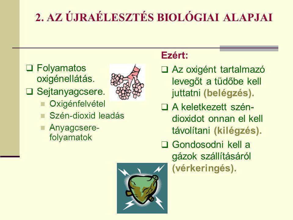 2. AZ ÚJRAÉLESZTÉS BIOLÓGIAI ALAPJAI  Folyamatos oxigénellátás.  Sejtanyagcsere.  Oxigénfelvétel  Szén-dioxid leadás  Anyagcsere- folyamatok Ezér