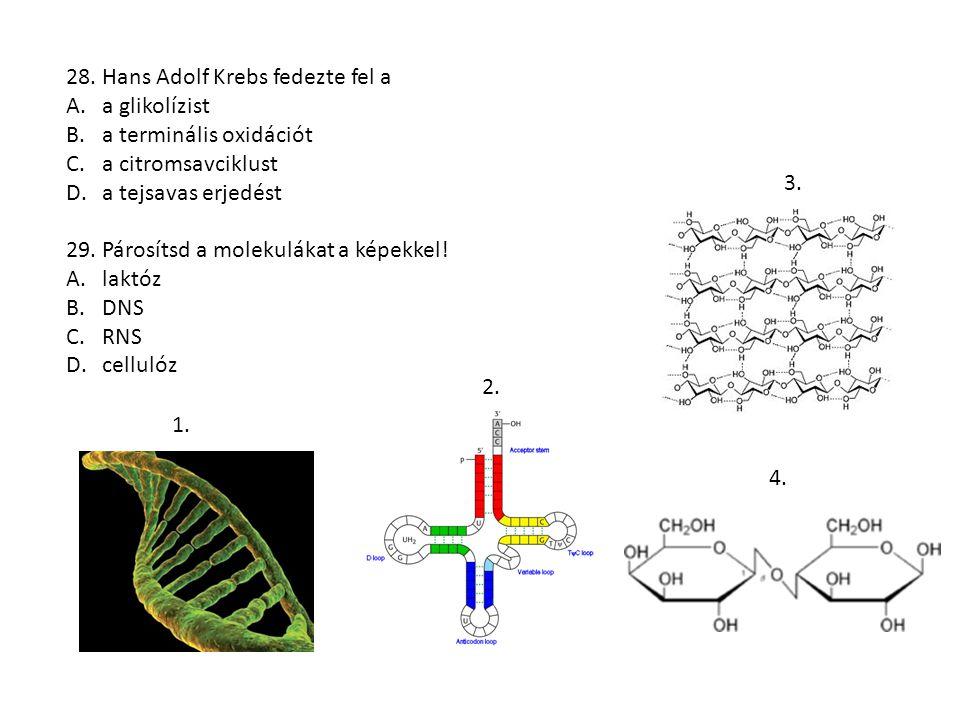 28. Hans Adolf Krebs fedezte fel a A.a glikolízist B.a terminális oxidációt C.a citromsavciklust D.a tejsavas erjedést 29. Párosítsd a molekulákat a k