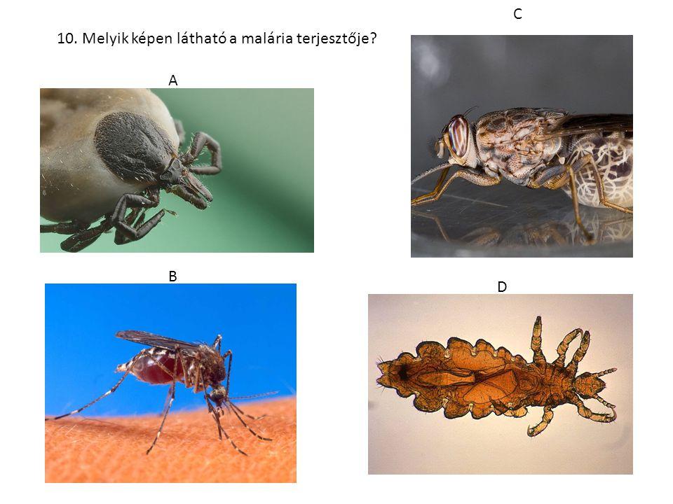 10. Melyik képen látható a malária terjesztője? A B C D