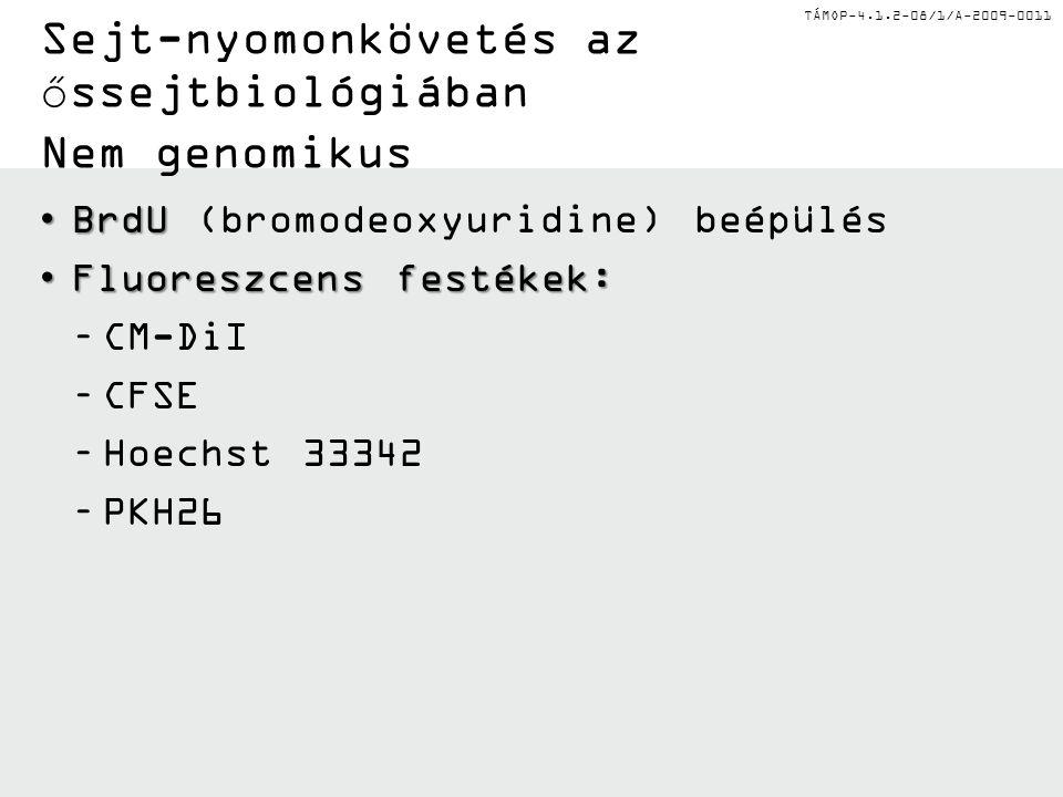 TÁMOP-4.1.2-08/1/A-2009-0011 Sejt-nyomonkövetés az őssejtbiológiában Nem genomikus •BrdU •BrdU (bromodeoxyuridine) beépülés •Fluoreszcens festékek: –C