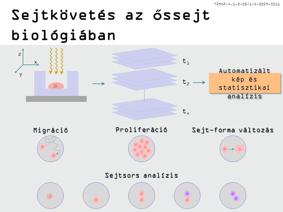 TÁMOP-4.1.2-08/1/A-2009-0011 Sejtkövetés az őssejt biológiában z y x Sejtsors analízis Migráció Sejt-forma változás Proliferáció t1t1 t2t2 tntn Automa