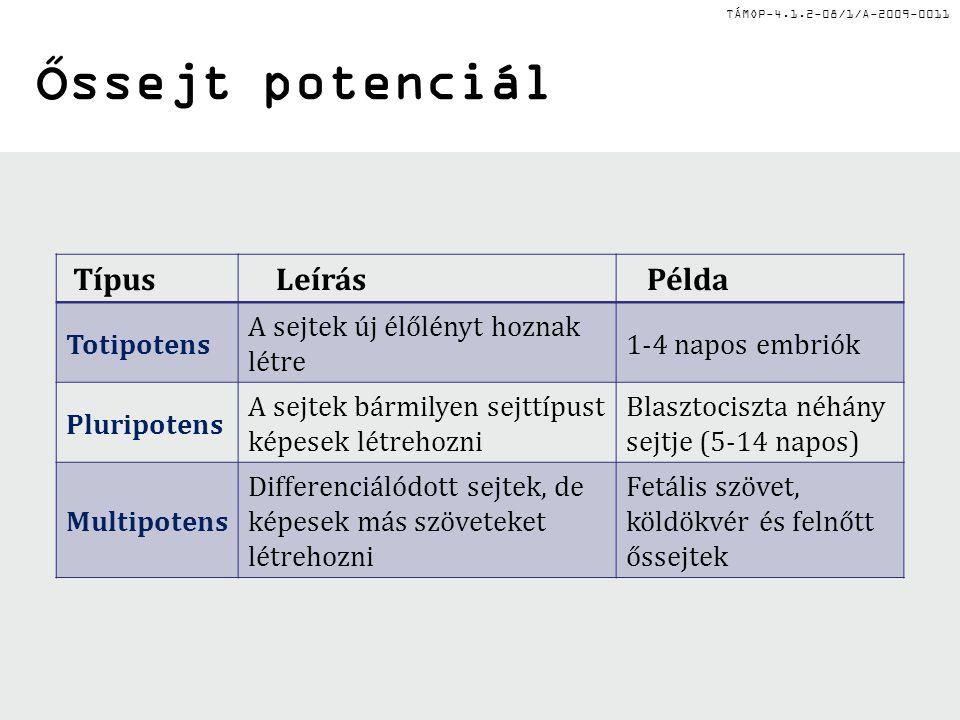TÁMOP-4.1.2-08/1/A-2009-0011 Az őssejtek eredete és az újraprogramozás + Oct4, Sox2, Klf4, Myc Blasztociszta Embrionális őssejtek PluripotensPluripotens Zigóta TotipotensTotipotens Felnőtt Epiblaszt (beágyazódás után) Epiblaszt őssejtek PluripotensPluripotens Késői embrió/ korai foetus Embrionális őssejtek PluripotensPluripotens Felnőtt őssejtek Multipotens vagy unipotens unipotens Bőr Központi idegrendszer Csontvelő Egyéb Indukált pluripotens őssejtek PluripotensPluripotens Belső sejttömegEpiblaszt Primordiális ivarsejtek Elköteleződés