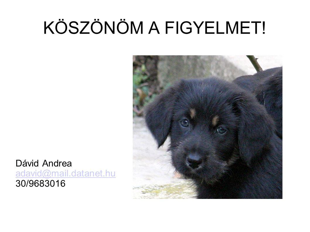 KÖSZÖNÖM A FIGYELMET! Dávid Andrea adavid@mail.datanet.hu 30/9683016