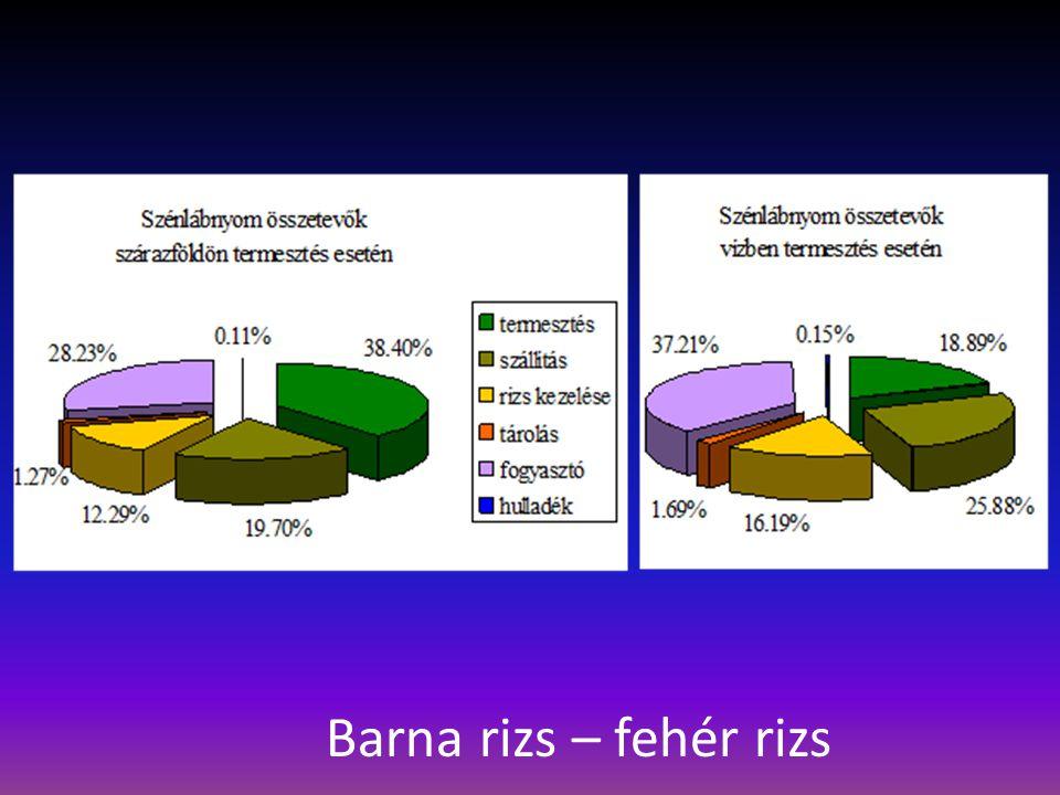 Barna rizs – fehér rizs