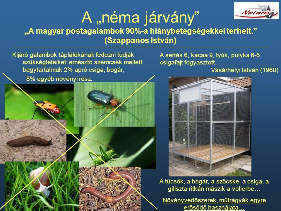 """A """"néma járvány"""" """"A magyar postagalambok 90%-a hiánybetegségekkel terhelt."""" (Szappanos István) Kijáró galambok táplálékának fedezni tudják szükséglete"""