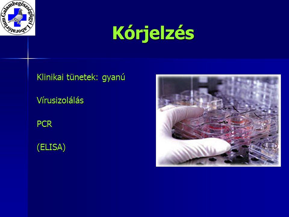 Kórjelzés Klinikai tünetek: gyanú VírusizolálásPCR(ELISA)
