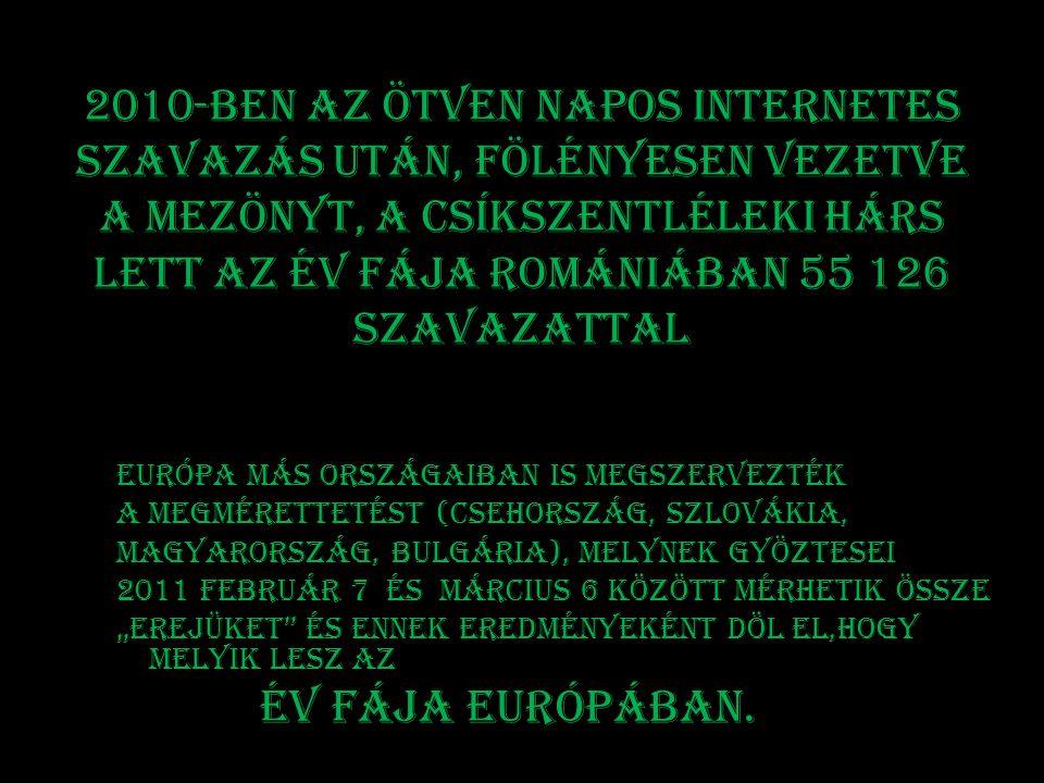 2010-ben Az ötven napos internetes szavazás után, fölényesen vezetve a mezönyt, a csíkszentléleki hárs lett az Év fája Romániában 55 126 szavazattal E