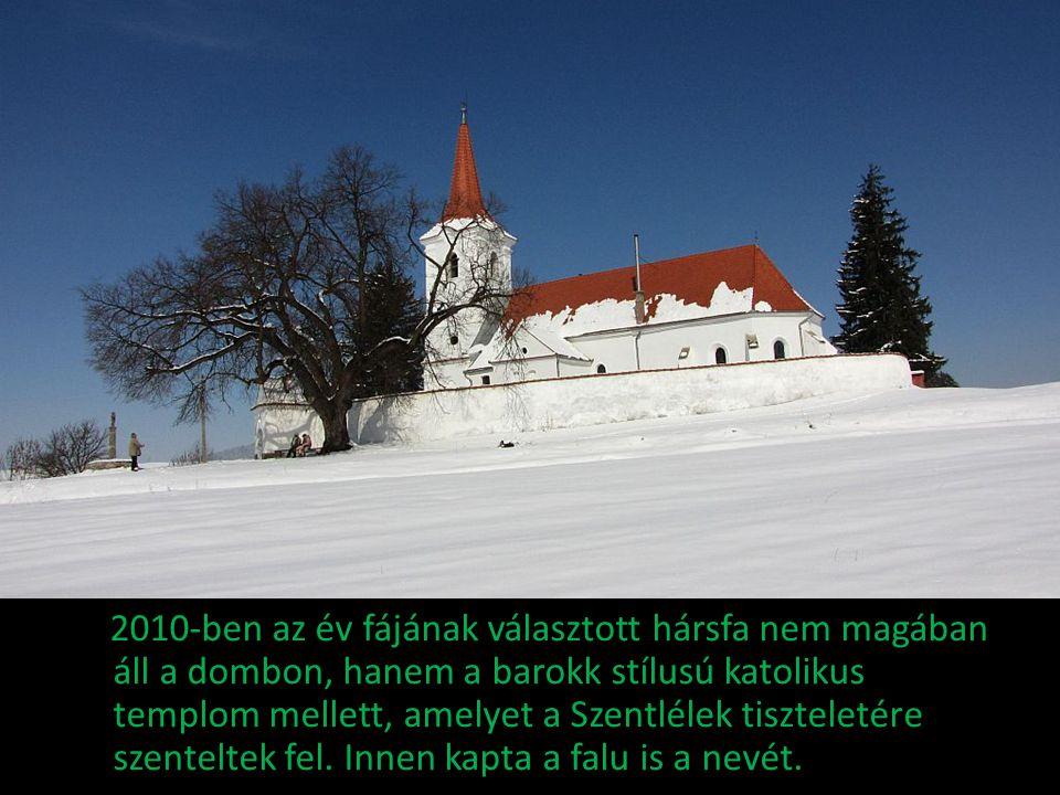 2010-ben az év fájának választott hársfa nem magában áll a dombon, hanem a barokk stílusú katolikus templom mellett, amelyet a Szentlélek tiszteletére