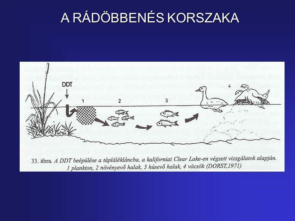A RÁDÖBBENÉS KORSZAKA