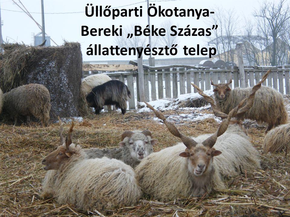 """Üllőparti Ökotanya- Bereki """"Béke Százas"""" állattenyésztő telep"""