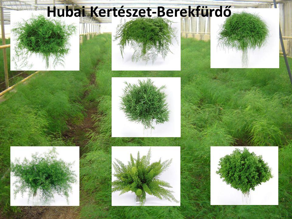 Hubai Kertészet-Berekfürdő