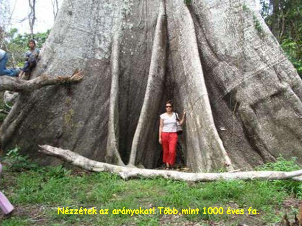 Egy kis fa alsó része