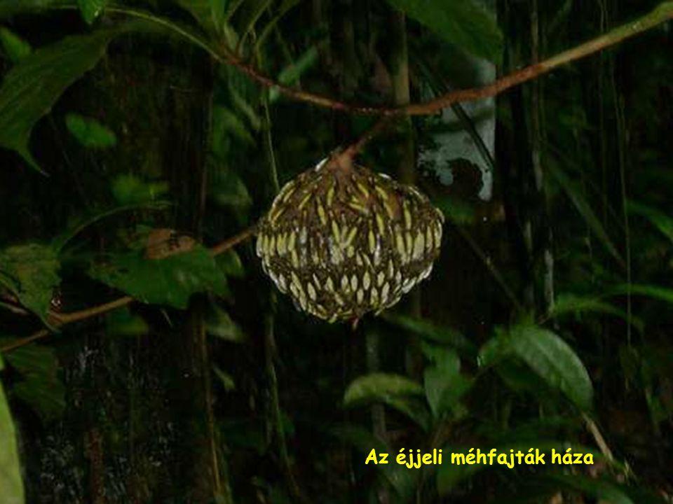 Tarantula-egy veszélyes pók fajta