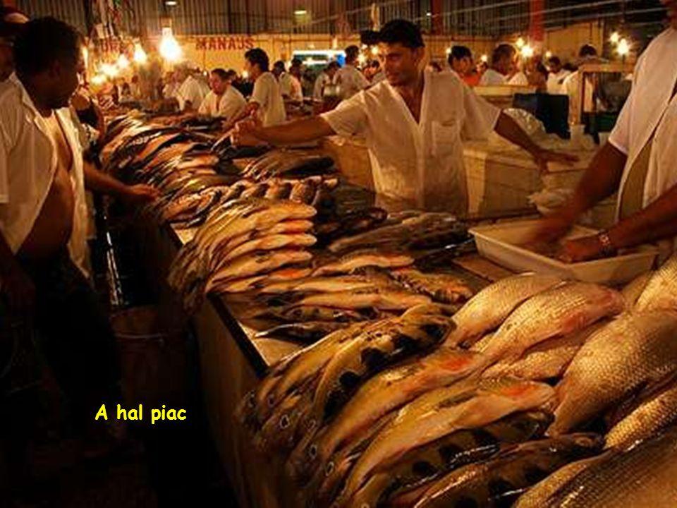 Kikötõ-Halászbárkák