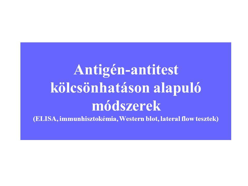 1 Antigén-antitest kölcsönhatáson alapuló módszerek (ELISA, immunhisztokémia, Western blot, lateral flow tesztek)
