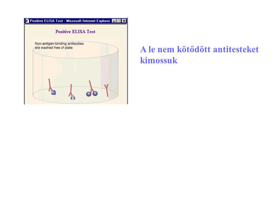 23 A le nem kötődött antitesteket kimossuk