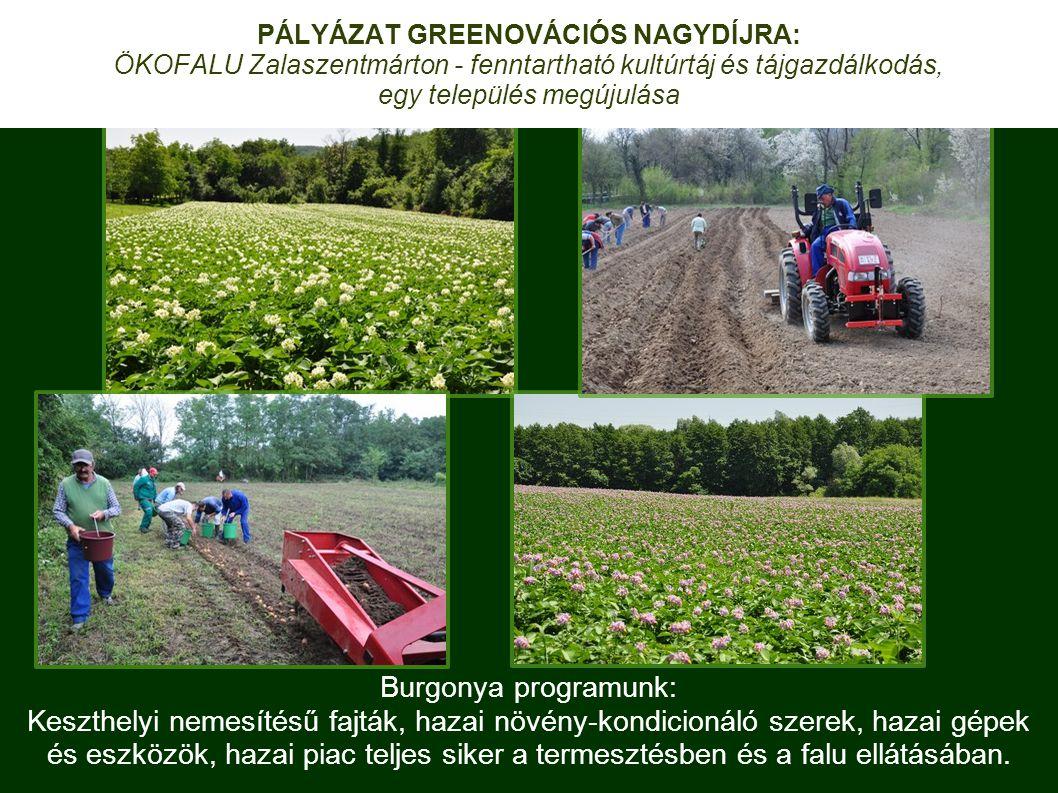 Burgonya programunk: Keszthelyi nemesítésű fajták, hazai növény-kondicionáló szerek, hazai gépek és eszközök, hazai piac teljes siker a termesztésben és a falu ellátásában.