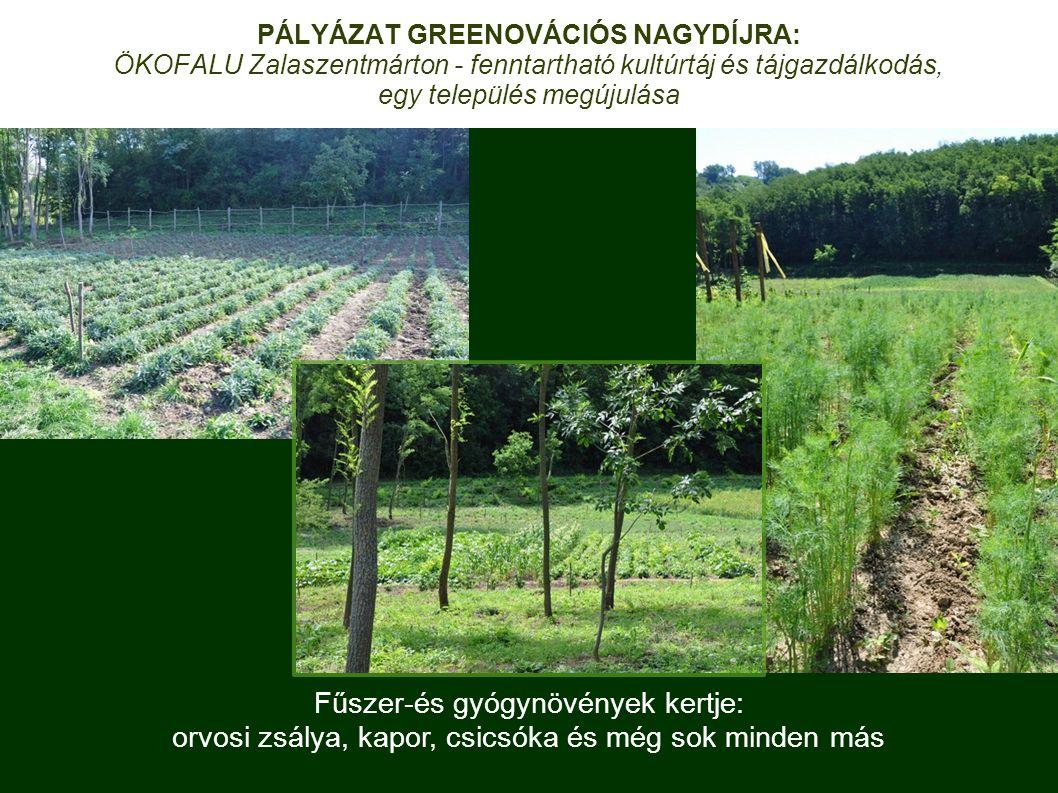 Fűszer-és gyógynövények kertje: orvosi zsálya, kapor, csicsóka és még sok minden más PÁLYÁZAT GREENOVÁCIÓS NAGYDÍJRA: ÖKOFALU Zalaszentmárton - fenntartható kultúrtáj és tájgazdálkodás, egy település megújulása
