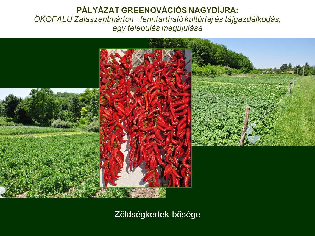 Zöldségkertek bősége PÁLYÁZAT GREENOVÁCIÓS NAGYDÍJRA: ÖKOFALU Zalaszentmárton - fenntartható kultúrtáj és tájgazdálkodás, egy település megújulása