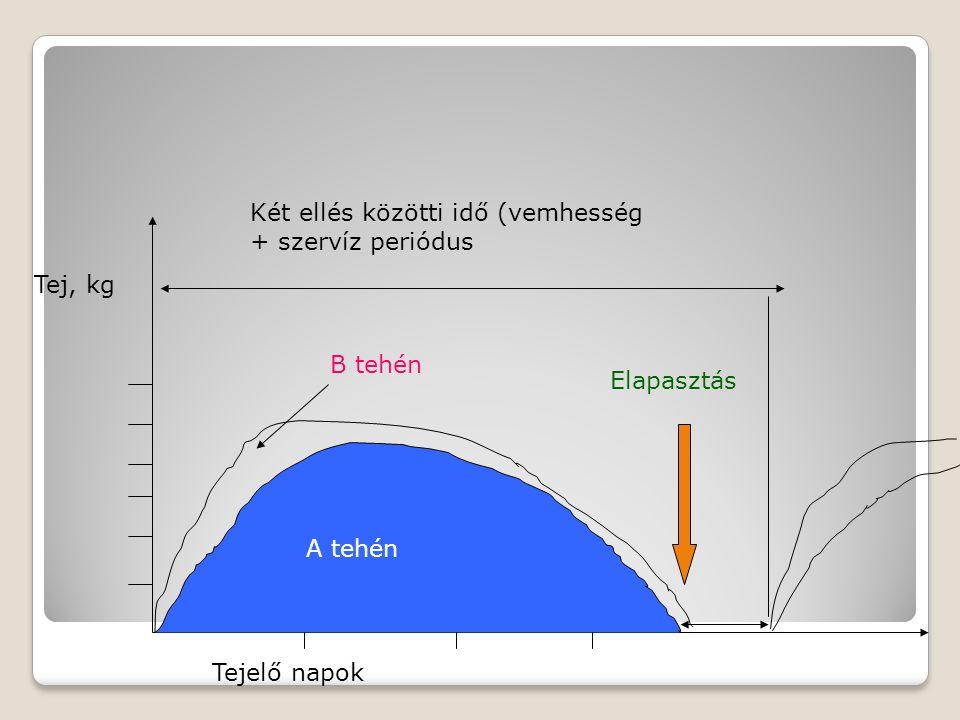 Tej, kg Tejelő napok A tehén B tehén Két ellés közötti idő (vemhesség + szervíz periódus Elapasztás