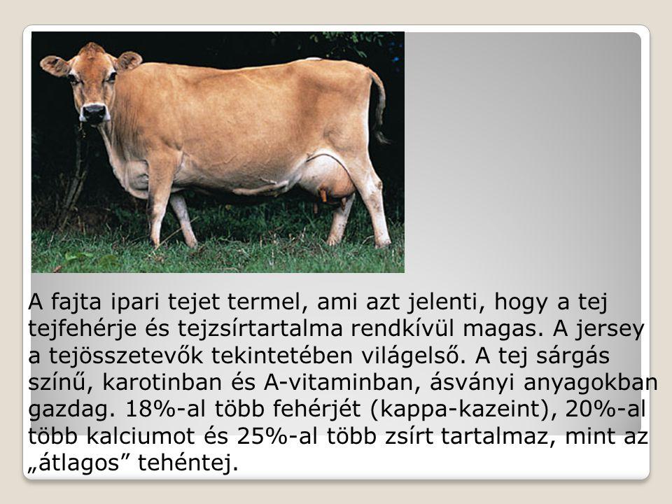 A fajta ipari tejet termel, ami azt jelenti, hogy a tej tejfehérje és tejzsírtartalma rendkívül magas. A jersey a tejösszetevők tekintetében világelső