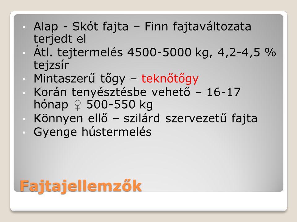 Fajtajellemzők Alap - Skót fajta – Finn fajtaváltozata terjedt el Átl. tejtermelés 4500-5000 kg, 4,2-4,5 % tejzsír Mintaszerű tőgy – teknőtőgy Korán t