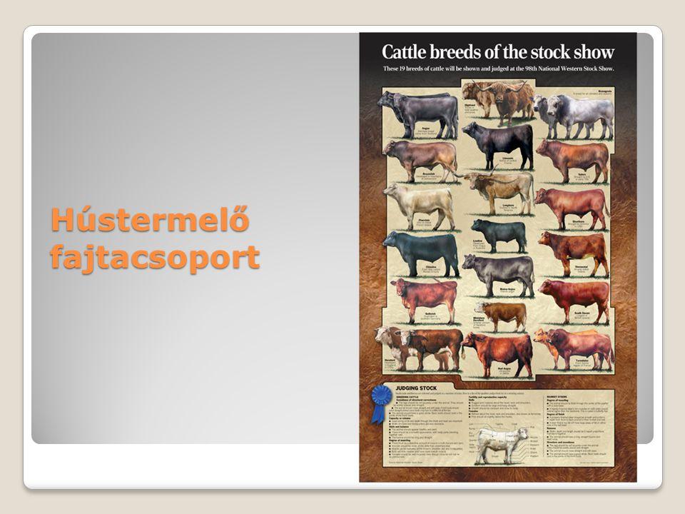 Hústermelő fajtacsoport