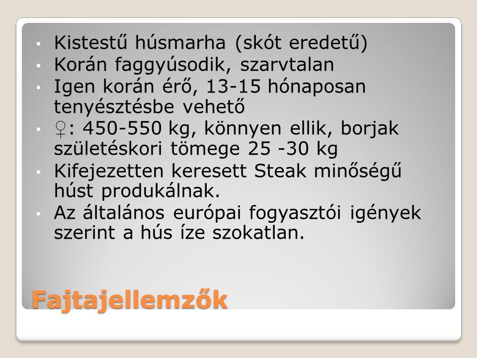 Fajtajellemzők Kistestű húsmarha (skót eredetű) Korán faggyúsodik, szarvtalan Igen korán érő, 13-15 hónaposan tenyésztésbe vehető ♀ : 450-550 kg, könn