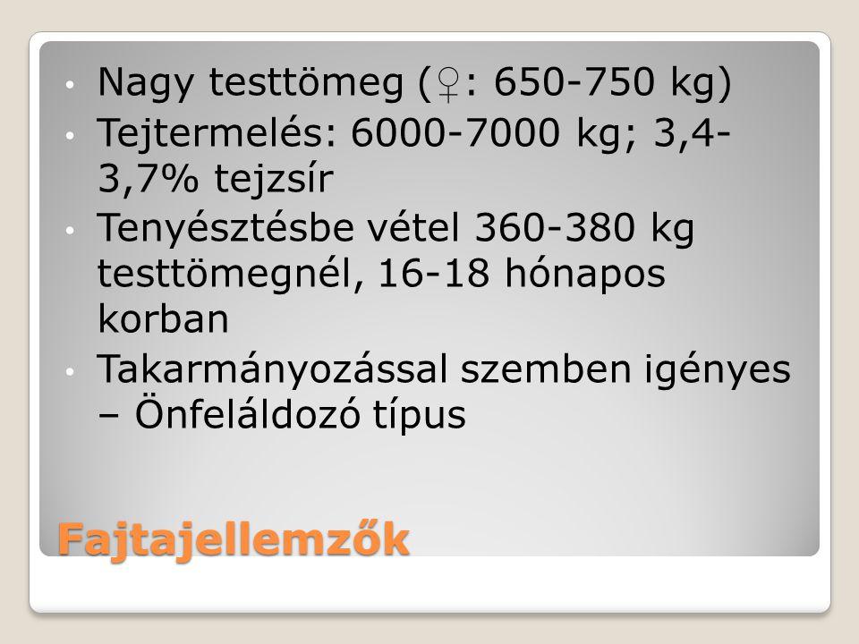 Fajtajellemzők Nagy testtömeg ( ♀ : 650-750 kg) Tejtermelés: 6000-7000 kg; 3,4- 3,7% tejzsír Tenyésztésbe vétel 360-380 kg testtömegnél, 16-18 hónapos