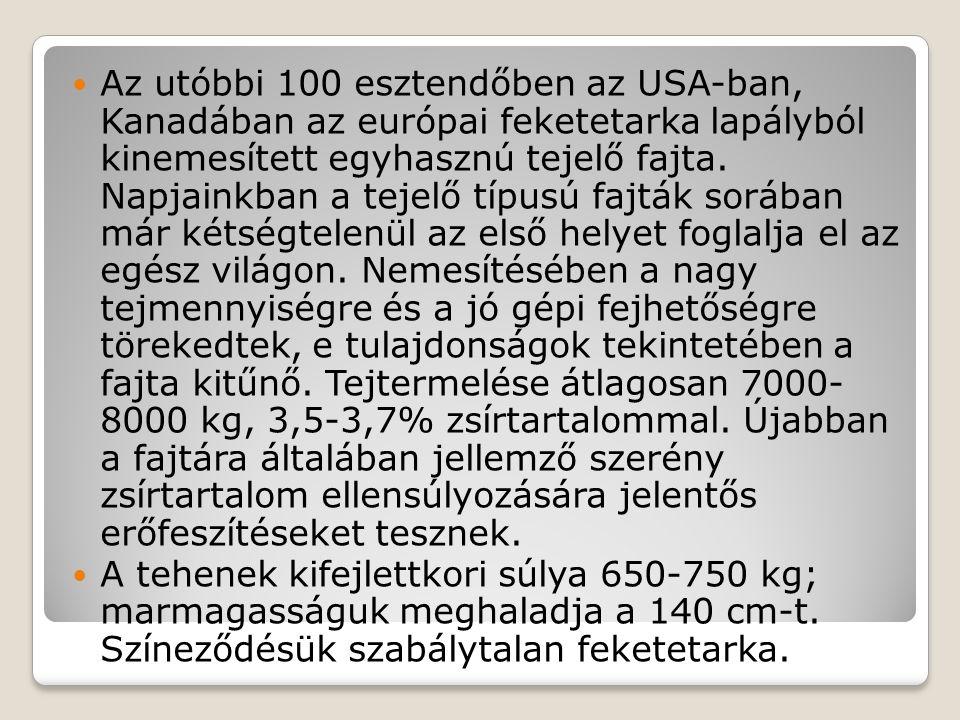 Az utóbbi 100 esztendőben az USA-ban, Kanadában az európai feketetarka lapályból kinemesített egyhasznú tejelő fajta. Napjainkban a tejelő típusú fajt