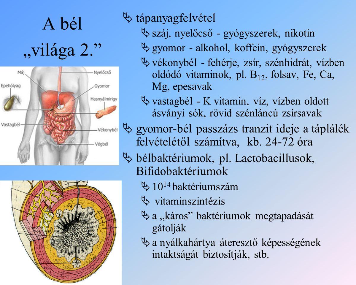 """A bél """"világa 2.  tápanyagfelvétel  száj, nyelőcső - gyógyszerek, nikotin  gyomor - alkohol, koffein, gyógyszerek  vékonybél - fehérje, zsír, szénhidrát, vízben oldódó vitaminok, pl."""