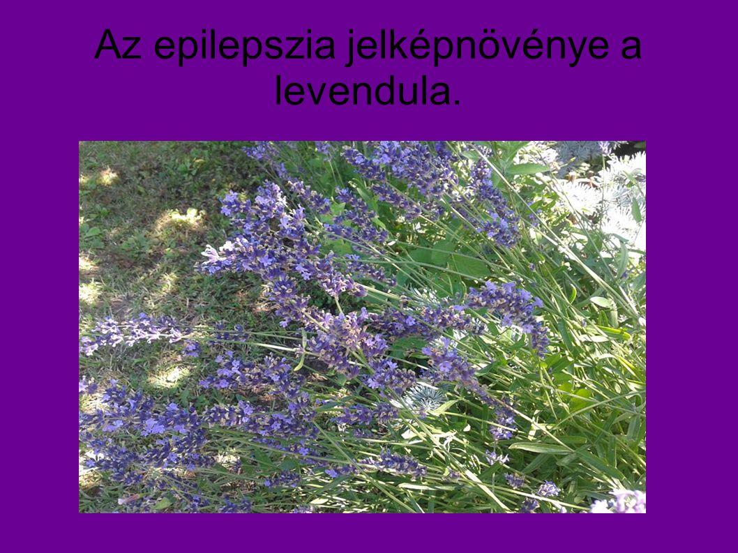 Az epilepszia jelképnövénye a levendula.