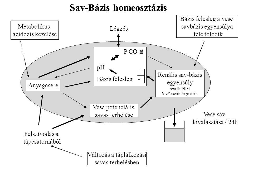 Sav-Bázis homeosztázis P CO  pH Bázis felesleg +-+- Renális sav-bázis egyensúly renális H  kiválasztás kapacitás Vese potenciális savas terhelése Anyagcsere Felszívódás a tápcsatornából Változás a táplálkozási savas terhelésben Vese sav kiválasztása / 24h Bázis felesleg a vese savbázis egyensúlya felé tolódik Légzés Metabolikus acidózis kezelése