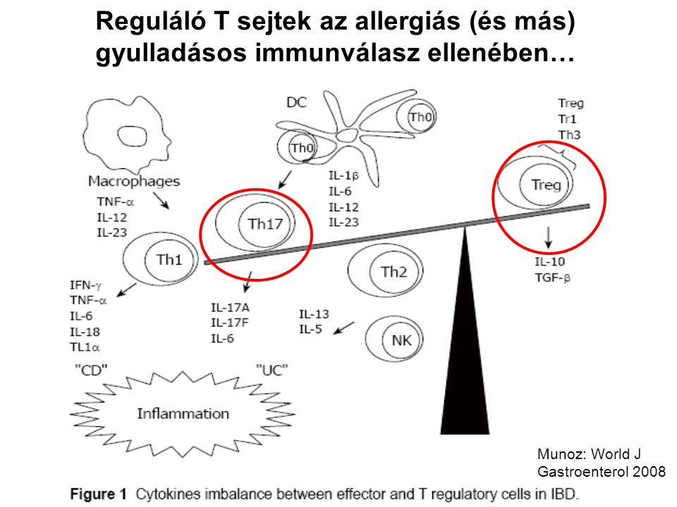Reguláló T sejtek az allergiás (és más) gyulladásos immunválasz ellenében… Munoz: World J Gastroenterol 2008