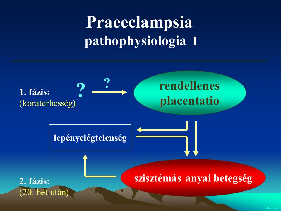 Praeeclampsia pathophysiologia I ? rendellenes placentatio Tamás P. ? 1. fázis: (koraterhesség) 2. fázis: (20. hét után) lepényelégtelenség szisztémás