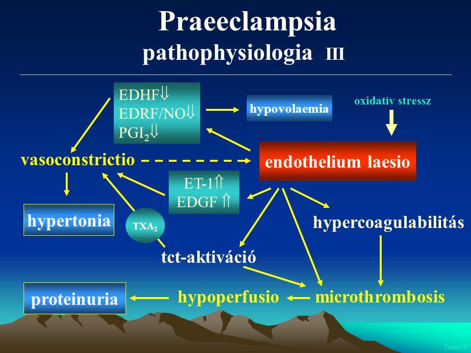 endothelium laesio vasoconstrictio hypercoagulabilitás microthrombosis hypertonia proteinuria hypoperfusio tct-aktiváció ET-1  EDGF  Tamás P. EDHF 