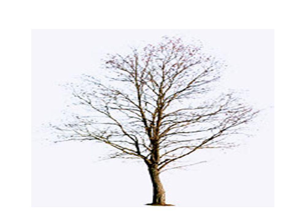 Időskori jellegzetességek depresszió és szorongás esetén: Memóriazavarra panaszkodik objektíven kimutatható emlékezetzavar nélkül.