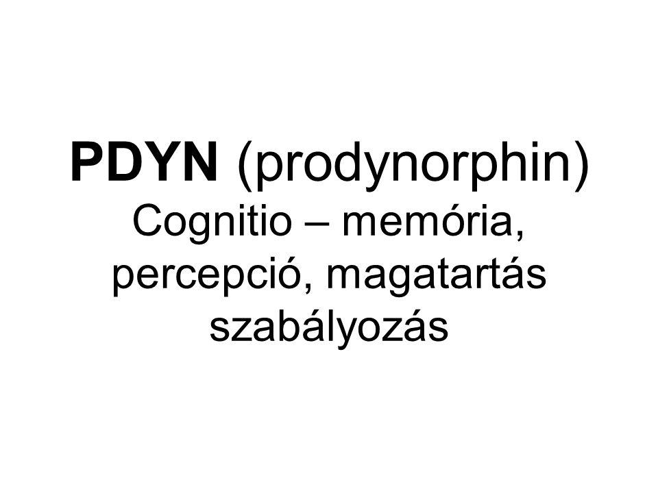 PDYN (prodynorphin) Cognitio – memória, percepció, magatartás szabályozás