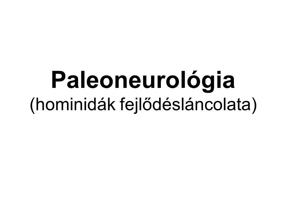 Paleoneurológia (hominidák fejlődésláncolata)