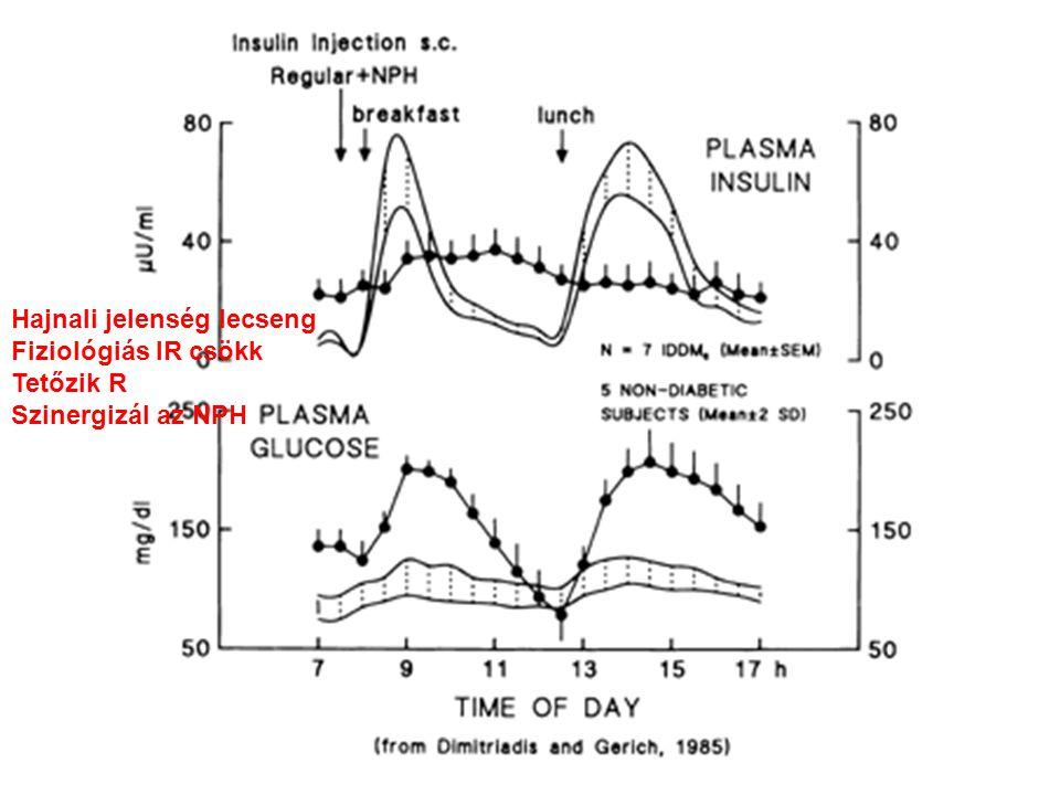 cortisol, Adrenalin csökken Vacsora lecseng Bázis inzulin emelkedik IR a legkisebb