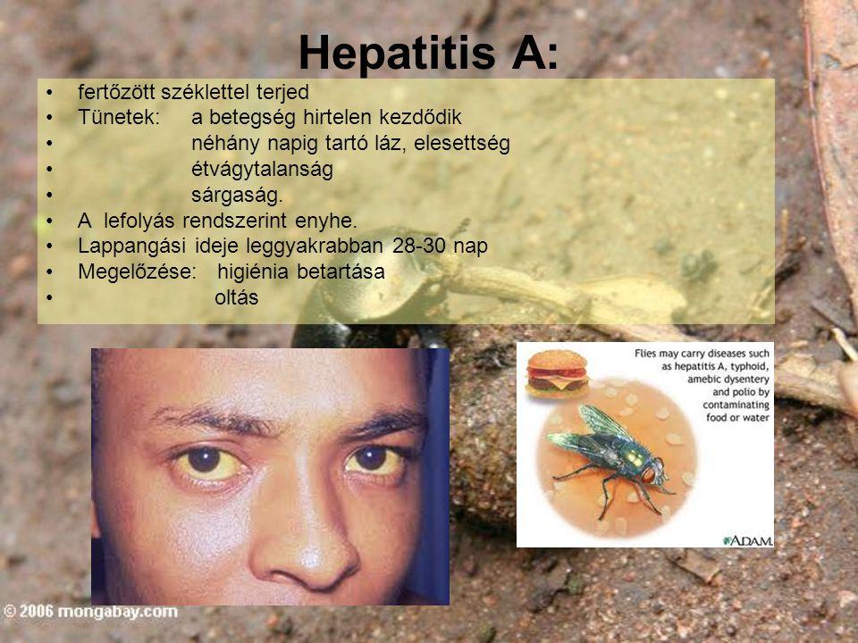 Hepatitis A: fertőzött széklettel terjed Tünetek: a betegség hirtelen kezdődik néhány napig tartó láz, elesettség étvágytalanság sárgaság. A lefolyás