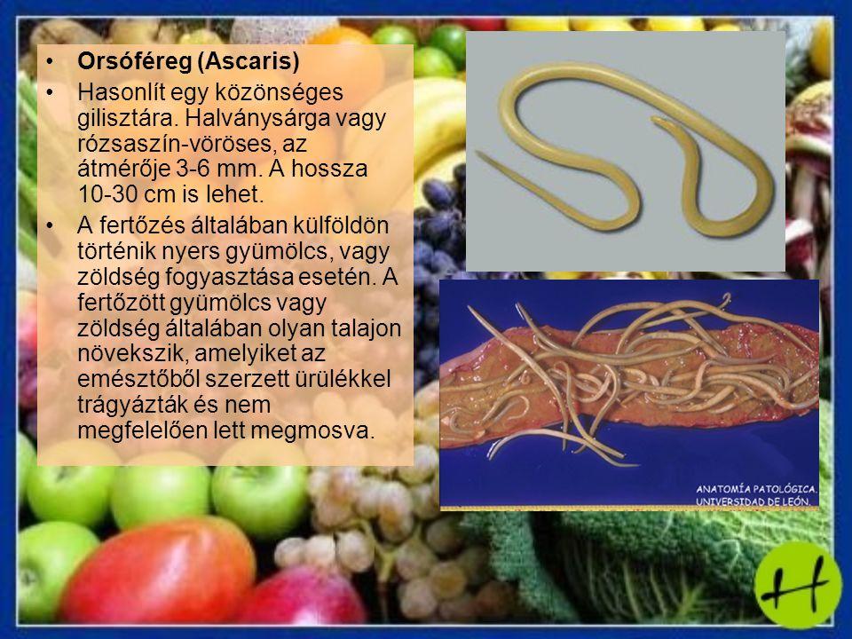 Orsóféreg (Ascaris) Hasonlít egy közönséges gilisztára. Halványsárga vagy rózsaszín-vöröses, az átmérője 3-6 mm. A hossza 10-30 cm is lehet. A fertőzé