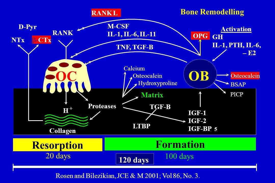 OC OB Resorption 20 days Formation 100 days 120 days NTx  -CTx D-Pyr RANK RANK L OPG TNF, TGF-B M-CSF IL-1, IL-6, IL-11 Proteases H + Collagen Matrix